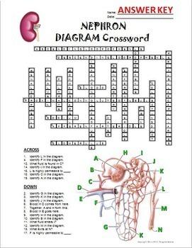 Nephron Crossword with Diagram {Editable}