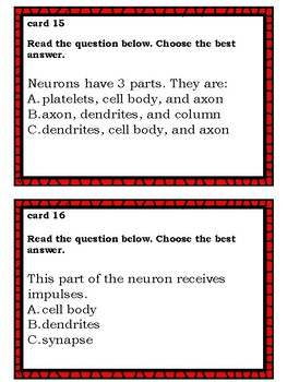 The Nervous System Task Cards