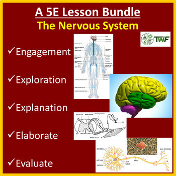 The Nervous System - 5E Lesson Bundle