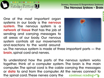 The Nervous System - Brain - NOTEBOOK Gr. 3-8