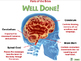 The Nervous System - Brain - PC Gr. 3-8