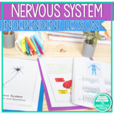 Parts and Functions of the Nervous System Worksheets and R