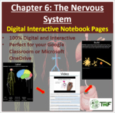 The Nervous System - Digital Interactive Notebook Pages