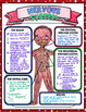 NERVOUS SYSTEM SCIENCE DOODLE NOTES, INTERACTIVE NOTEBOOK, MINI ANCHOR CHART