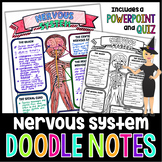The Nervous System Doodle Notes | Science Doodle Notes