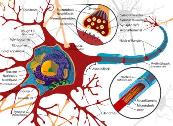 The Nervous System 7 Product Bundle