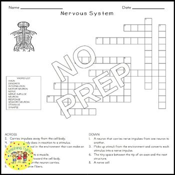 The Nervous System Science Crossword Puzzle Coloring Worksheet Middle School