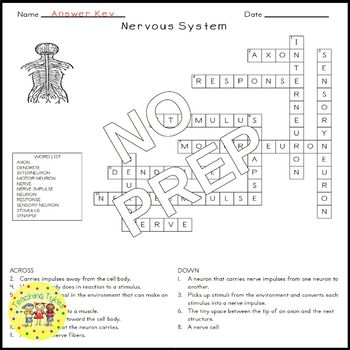 Nervous System Crossword Puzzle