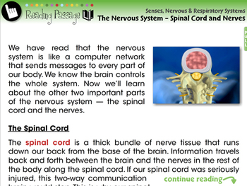 The Nervous System - Spinal Cord and Nerves - MAC Gr. 3-8