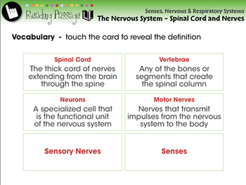 The Nervous System - Spinal Cord and Nerves - PC Gr. 3-8