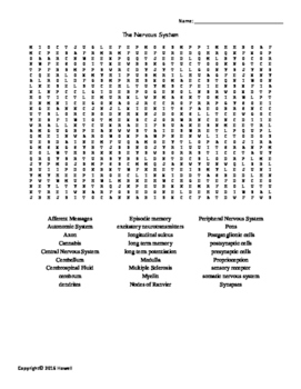 The Nervous System Vocabulary Word Search for Physiology