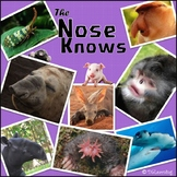 The Nose Knows - Animal Adaptations Matching Activity