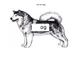 """The """"OG"""" dogs"""