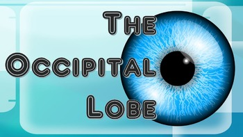 The Occipital Lobe - Brain Games (Powerpoint & 4 Games)