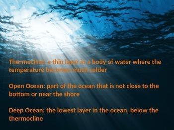 The Ocean Ecosystem Powerpoint