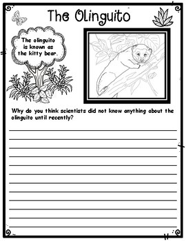 The Olinguito Rainforest Animal Discovery Critical Thinking Activity