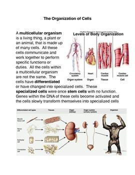 The Organization of Organisms