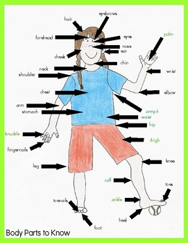 The Owie's On Me! Teach, review, and assess body parts using bandages for FREE!