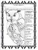 The Owl's Anatomy 1