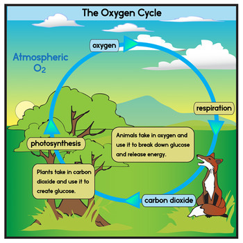 oxygen cycle clip art set by the painted crow teachers