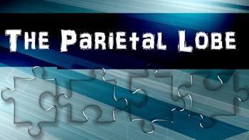 The Parietal Lobe - Brain Games (Powerpoint & 5 Games)