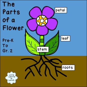 The Parts of a Flower Labeling Activity Pre-K to Grade 2