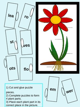 The Parts of a Plant We Can't Live Without!
