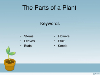 The Parts of a Plant eBook