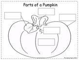 The Parts of a Pumpkin Cut and Paste