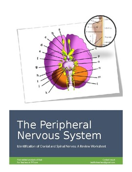 American Educational Nervous System Model Activity Set