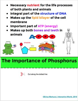 The Phosphorus Cycle Interactive Flip Book and Quiz