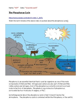 The Phosphorus Cycle with KEY