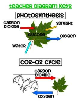 The Photosysthesis & CO2-O2 Cycle Connection