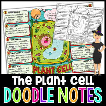 Plant Cells Science Doodle Notes with PowerPoint & Quiz