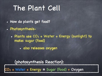 The Plant Cell Powerpoint Presentation Lesson