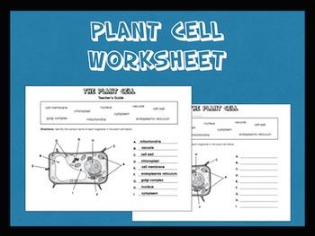 Plant Cell Worksheet
