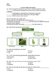 The Plant Kingdom (Introduction to Plants) - Worksheet | Distance Learning