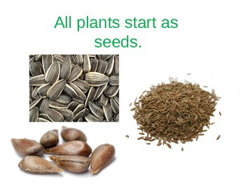 The Plant Life Cycle & Parts of the Plant PowerPoint