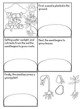 The Plant Life Cycle and The Tiny Seed By Eric Carle with Literature