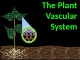 The Plant Vascular System