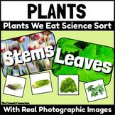 The Plants We Eat: A Parts of a Plant Sort