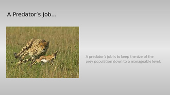 The Predator and Prey Relationship Powerpoint