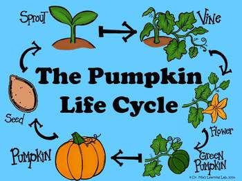 The Pumpkin Life Cycle (a book for early/emergent readers)