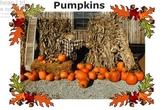 The Pumpkin Life Cycle (and expository writing)