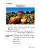 The Pumpkin Patch Lesson Plan