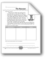 The Raccoon (Categorizing Facts)