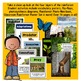 All About the Rainforest with Layers of the Rainforest & Rainforest Animals