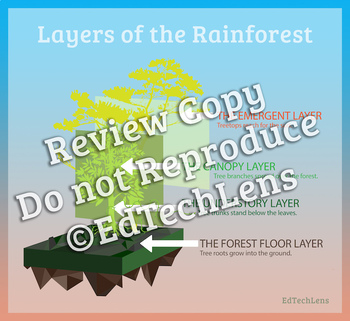 Rainforest Habitats and Their  Destruction: Graphic Organizers for Gr 1-2