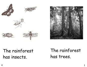 The Rainforest Has- a non-fiction guided reading book