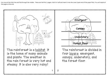 The Rainforest Mini Book (in English and Spanish)